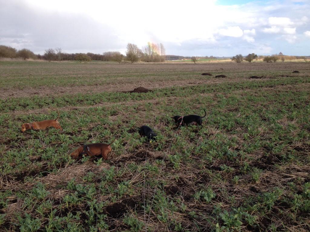 Det bedste i verden, at grave efter mus eller i kæmpe muldvarpeskud ude i engen...